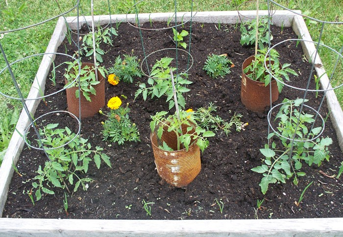 My Vegetable Garden: Week 3