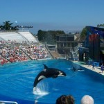 Amazing Shows and Discoveries at SeaWorld