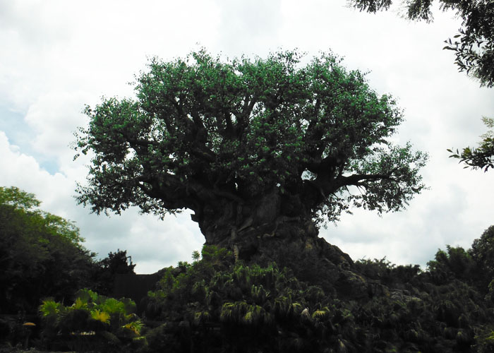 tree at animal kingdom