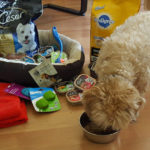 Win a prize pack for your small dog #SpringForSmallDogs